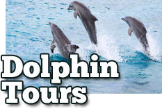 Dolphin Tours Available